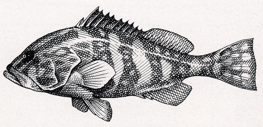 Ласло Кубинуи. Рыба