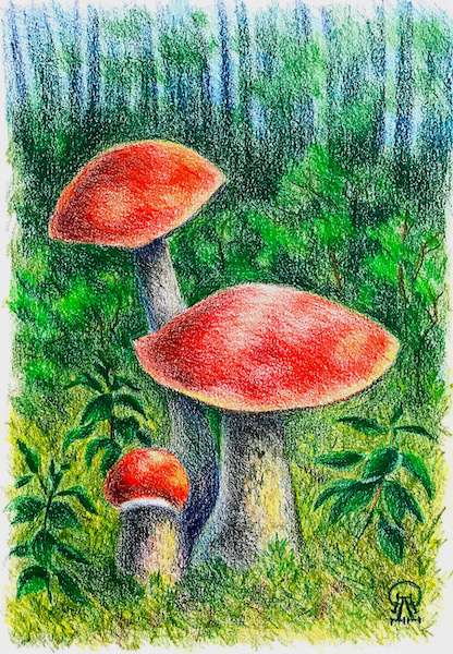 Larissa Lukaneva. Aspen mushrooms. Sketch.