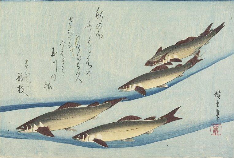 японская форель