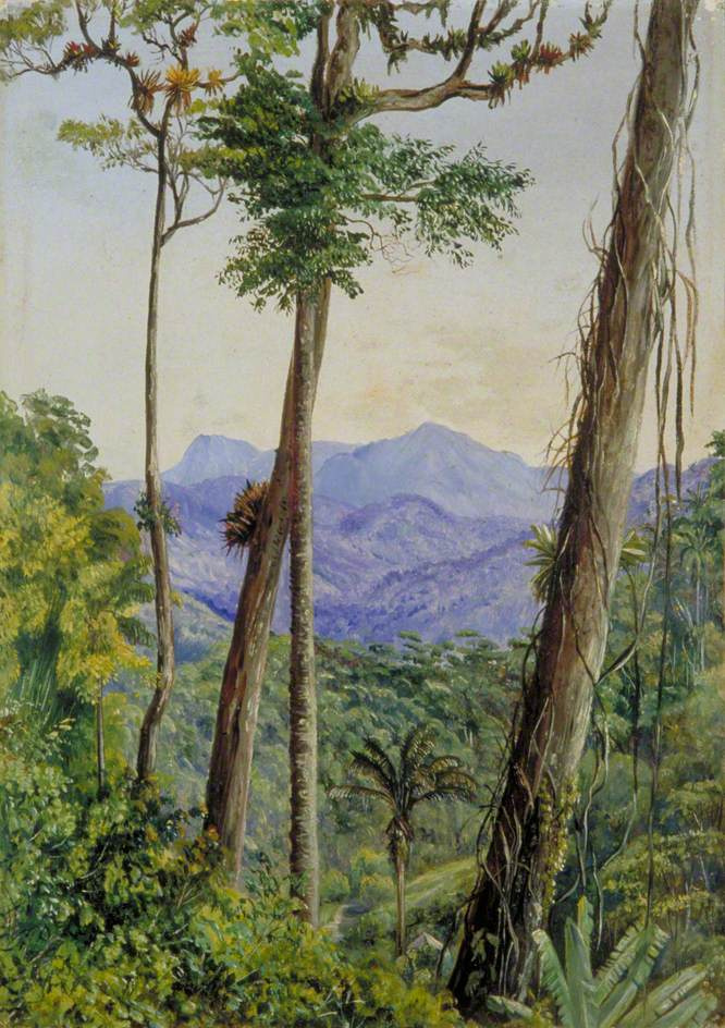 Марианна Норт. Вид из дома мистера Вайльхорна, Бразилия