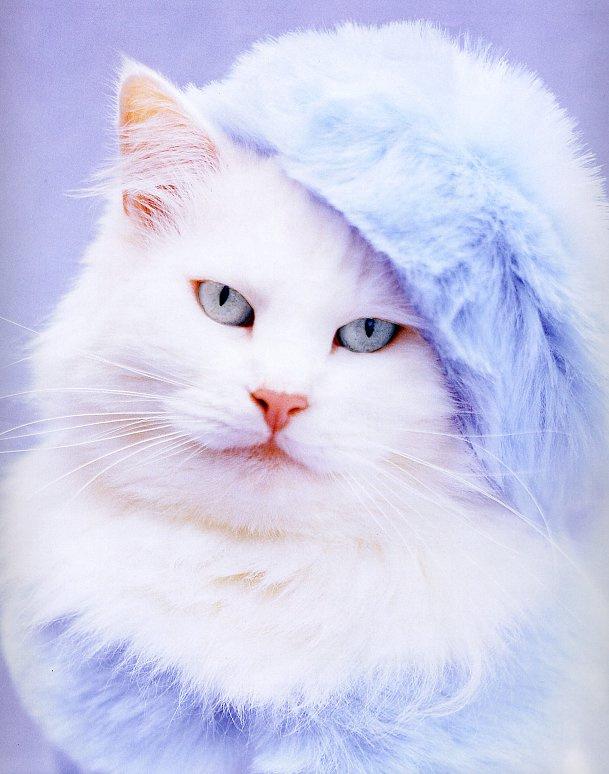 Рейчел Хейл. Белый кот