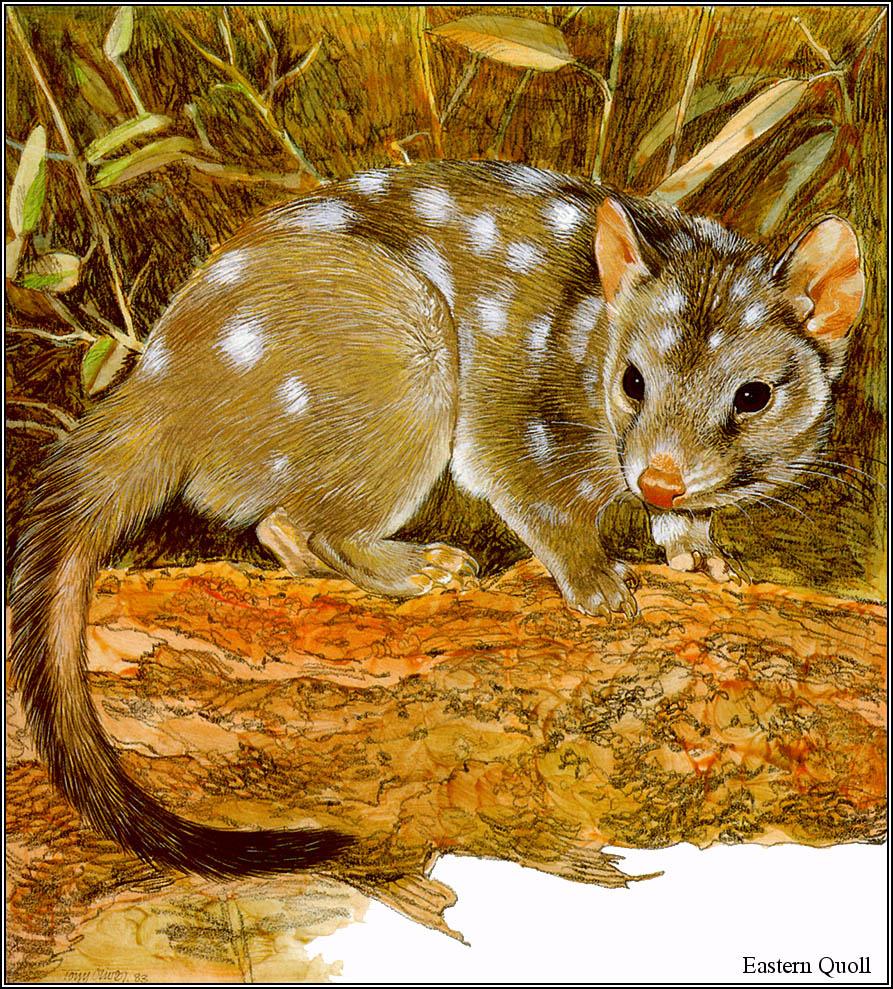 Тони Оливер. Австралийские вымирающие виды 15