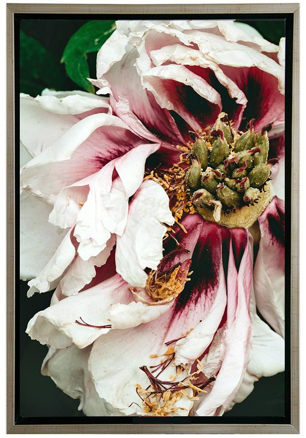 Irina Dotter. Flowering maturity
