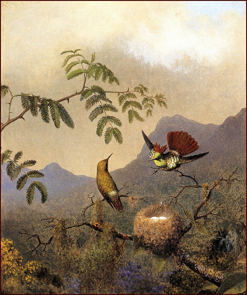Martin Johnson Head. Hummingbird coquette
