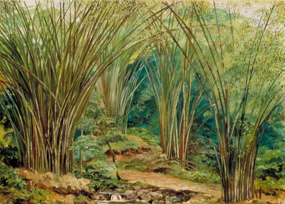 Марианна Норт. Бамбук у реки, Ямайка