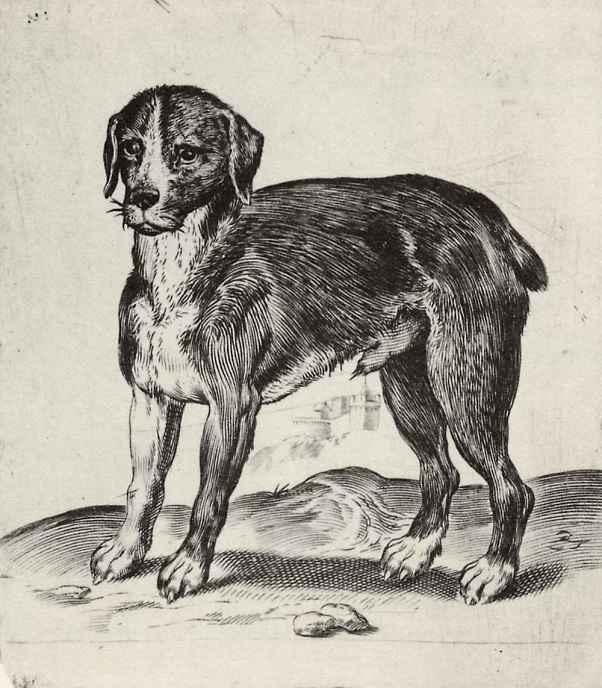 Агостино Карраччи. Собака