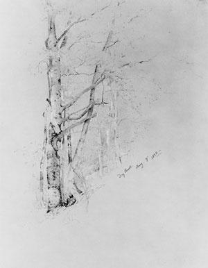 Джервис Макент. Набросок дерева