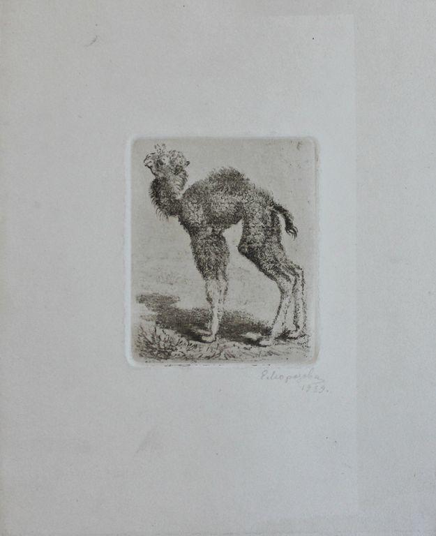 Elena Georgievna Morozova-Ekkert. Little camel