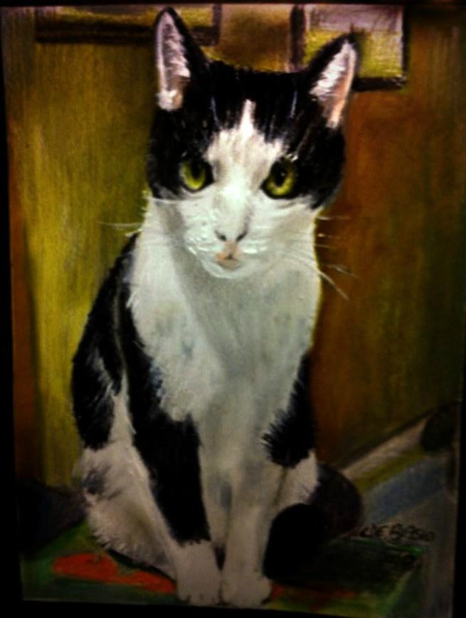 Cristina de biasio. Napoleon Sonia's cat