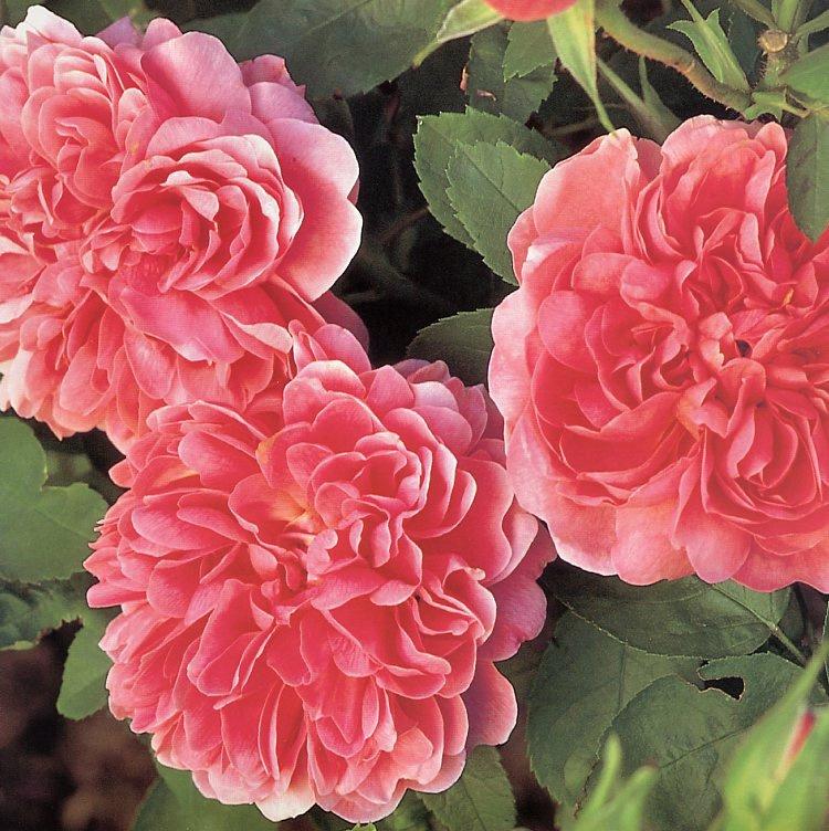 Клей Перри. Нежные цветы