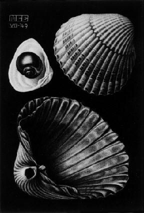 Maurits Cornelis Escher. Sinks