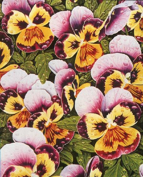 Гэри Грин. Цветы