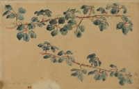 Two branches with leaves