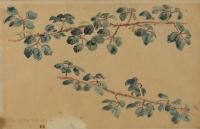 Две ветви с листьями