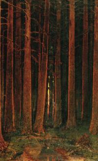 Закат солнца в лесу