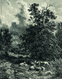 A flock of sheep in the woods