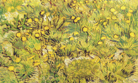 Vincent van Gogh. Field of yellow flowers