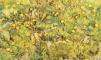 Винсент Ван Гог. Поле с желтыми цветами