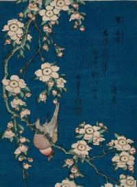 Снегирь на усыпанной цветами вишневой ветке
