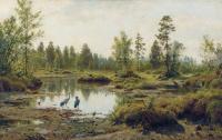 Swamp. Polesie