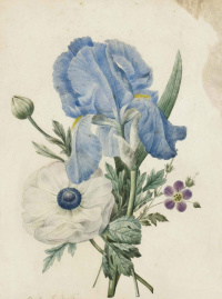 Bouquet: iris, geranium and white poppy