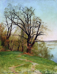 Дуб на берегу реки