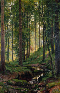 Stream in the forest (On the hillside)