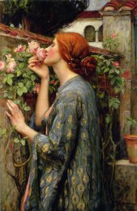 Моя сладкая роза (Душа розы)