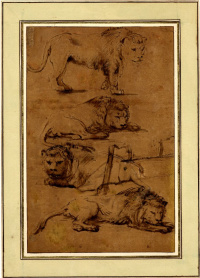 Four studies of lions