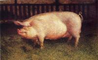 Джейми Уайет. Портрет свиньи