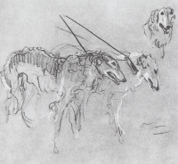 Greyhounds of the Royal hunt