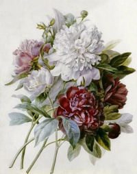 Bouquet: red, pink and white peonies