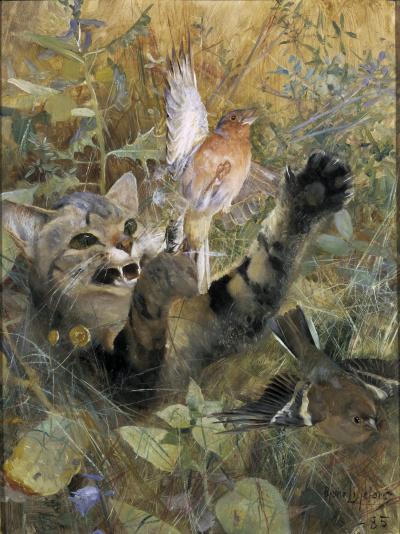 Кот и зяблик