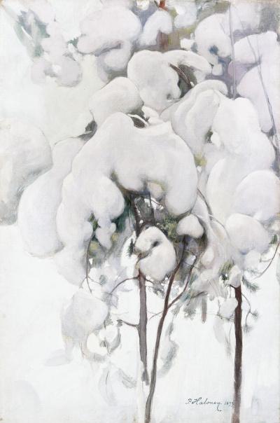 Snow-covered pine saplings
