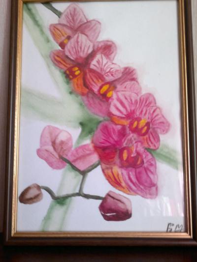 Orchidі