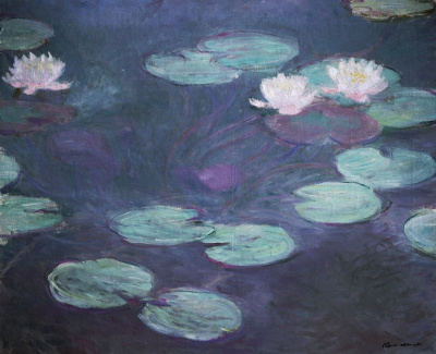 Water lilies in pink