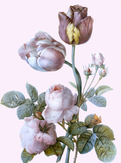 "Tulips and roses. ""Botanical Illustrations"""
