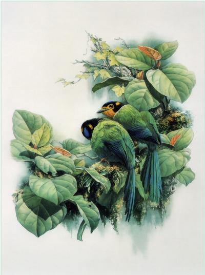 Птицы 23