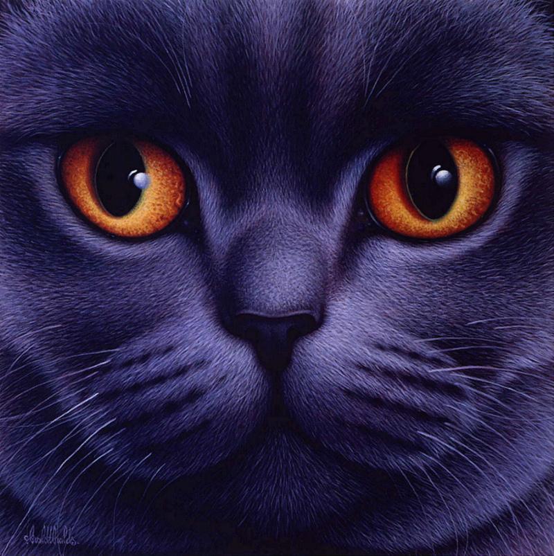 Картинки с котами на аватарку
