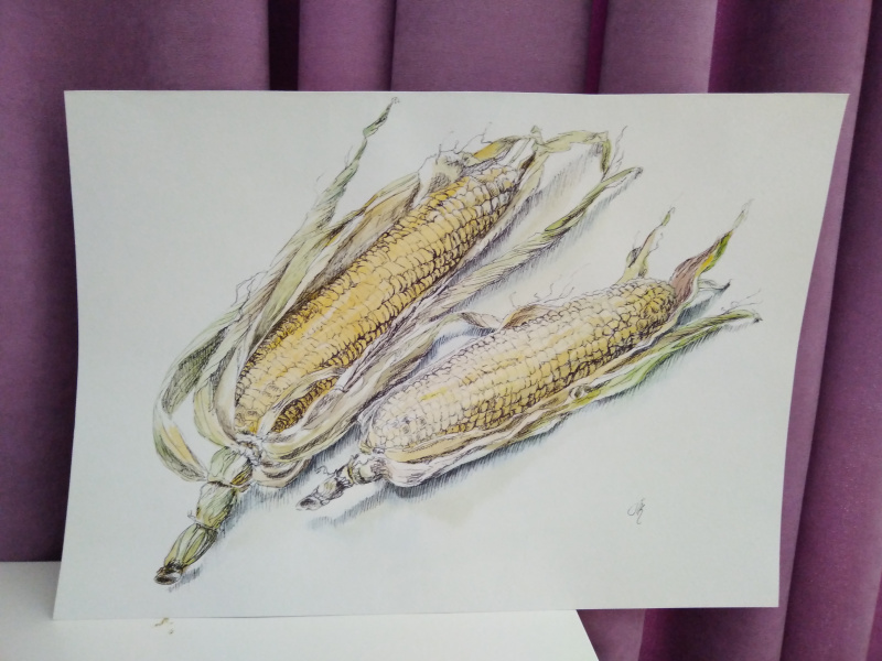 Полина Комкова. Натюрморт с кукурузой