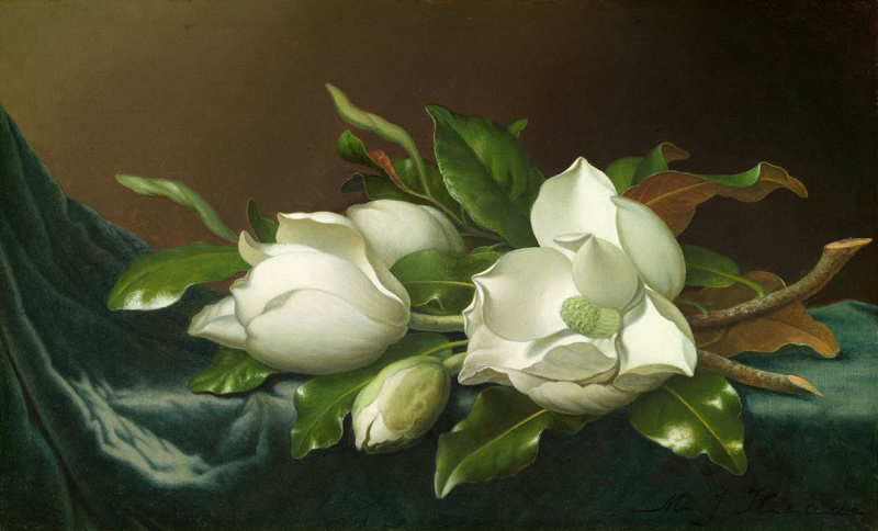 Martin Johnson Head. Magnolias on blue velvet