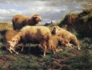 Пейзаж с овцами