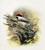 Птицы  51