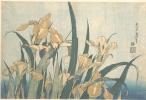 Кацусика Хокусай. Ирисы и луговая цикада
