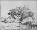 The cherry tree on the plain Biot