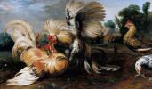 Франс Снейдерс. Петушиный бой