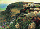A flock of sheep on the English coast