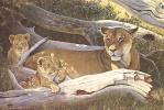 Альберт Эрл Гилберт. Африканская львица и детеныши