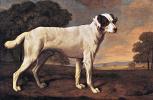George Stubbs. White dog Viscount Gormanston