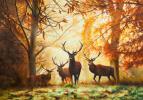 Савелий Камский. Осенью на оленьей тропе